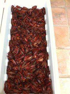 How to boil/cook crawfish. Crawfish Recipes, Seafood Boil Recipes, Cajun Recipes, Gourmet Recipes, Cooking Recipes, Cooking Ideas, Drink Recipes, Food Ideas, Crawfish Party