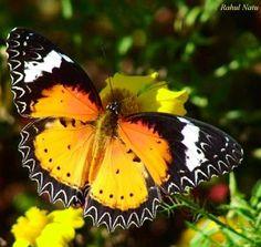 Butterfly via A Bird's Eye View on Facebook