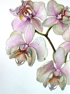 Botanical Orchid Print, Vintage Orchid Illustration, Phalaenopsis heideperle No. 118. $7.25, via Etsy.