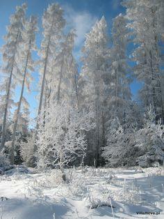 Our beautiful winter in Ustrzyki Dolne