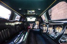 Rogzee a Lili pózují v prostorné limuzíně a chystají se na romantický výlet.