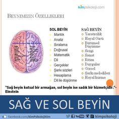 Beynimiz ile ilgili bilgiler