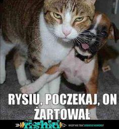 Kot obrońca