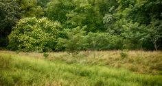 https://flic.kr/p/xWqB4u | Nichols Arboretum - No. 2, Ann Arbor, MI, August, 2015 | NAP_Canon EOS 5DS R_20150825_013A0438_0183-Edit.tif