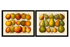 Apples and Pears Pair,  1895 Diptych