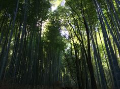 Bamboo Forest in Arashayima,Japan