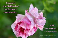 View Full Size (1280 x 853)  Prayer is the lifeblood of an intimate relationship with the Father. ~ Dr. Charles Stanley