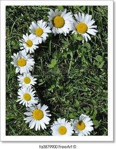 Free art print of Letter of daisies