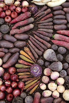 mosaic of vegetables by 1monde2photos