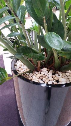 OBCHODNÍ CENTRUM OLOMOUC 12/2013   Výroba-květináče.cz Plants, Plant, Planets
