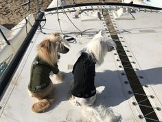 Chic fashion for pets Textiles, Sams, My Darling, Cousins, Love Of My Life, Husband, Chic, Fashion, City