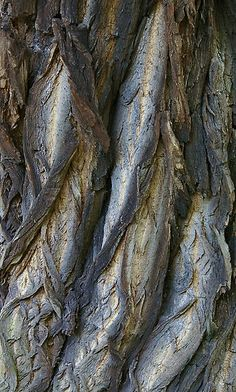 Tree Bark Textures with earthy grey tones - nature's artwork; organic texture inspiration