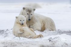 Beautiful Cub and mother by Judith Conning on 500px