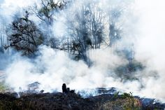 Recent haze laws not tackling root cause: NGOs | News | Eco-Business | Asia Pacific