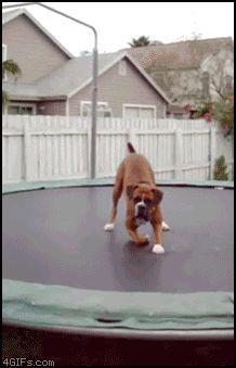 Dog on a trampoline. TOO. CUTE.