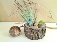 Hey, I found this really awesome Etsy listing at https://www.etsy.com/listing/186664690/air-plant-terrarium-living-terrarium