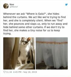 Cute Funny Animals, Funny Cute, Cute Cats, Crazy Cat Lady, Crazy Cats, Kittens Cutest, Cats And Kittens, Animals And Pets, Baby Animals