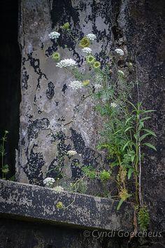 Fort Monroe flowers 297