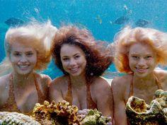64 Mako Meerjungfrauen Ideen Mako Meerjungfrauen Meerjungfrau Einfach Meerjungfrau