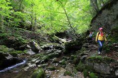 Klammwandern am Bach entlang nahe Dittelbach. Mountains, Nature, Travel, Road Trip Destinations, Environment, Round Round, Vacation, Naturaleza, Viajes