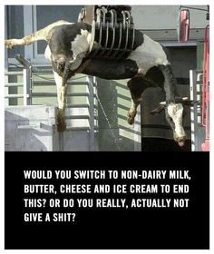 Go vegan! And I don't even buy vegan cheese or butter anymore. Don't miss it a bit.