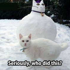 6. Snowcat Part 6 Seriously, who did this?