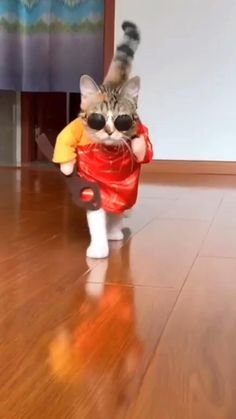 Funny Animal Jokes, Funny Cute Cats, Cute Funny Animals, Funny Animal Pictures, Cute Baby Dogs, Baby Cats, Funny Babies, Cute Cat Costumes, Gato Gif