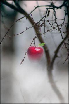 Winter Apple  Very Snow White/Evil Queen. :)