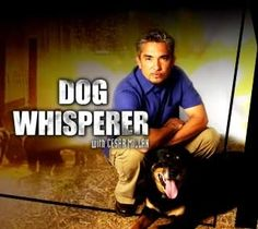 """The Dog Whisperer...""""Ceasar Millan""""  awesome show and his methods do work...I practice them with my dogs!"""