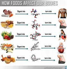 food affect, bodi, fibromyalgia, amino acids, eat right, junk food, fiber, fitness foods, fitness infographic