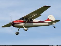Cessna 170B aircraft picture