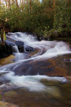 Cove Creek Falls, Pisgah National Forest in North Carolina mountains near Asheville Asheville Waterfalls, Nc Waterfalls, North Carolina Waterfalls, Camping In North Carolina, North Carolina Mountains, Beautiful Waterfalls, Beautiful Landscapes, The River, Vintage Farm