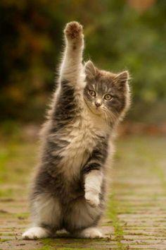 High five!! cute, #cats love