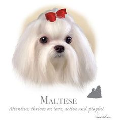 "MALTESE dog fabric with Phrase on One 18"" x 22"" Fabric Panel for Quilting and Sewing. Actual picture"