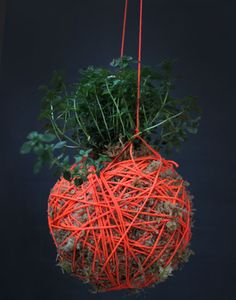 Moss Ball Hanging Plants by Mister Moss