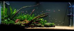 Low Tech Tank Show-and-Tell (low tech can be lush, too! =) - Page 119 - The Planted Tank Forum