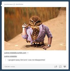 """""""I googled sassy bird and was not disappointed"""" 