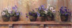 Violets+in+Pots