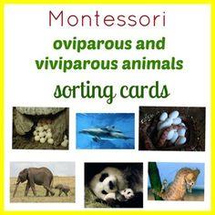 Montessori Oviparous and Viviparous Animals Sorting Cards