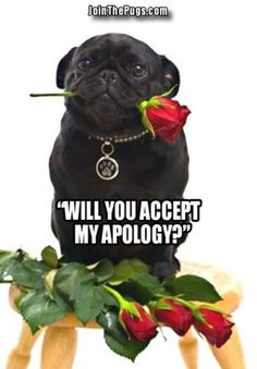 pug says i love you 1000 images about for my queen on pinterest i love my 3615