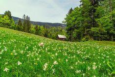 Landscape Ideas for Flowers in a Birdbath Garden - Things to Consider Green Landscape, Landscape Prints, Forest Landscape, Meadow Flowers, Wild Flowers, Bird Bath Garden, Colors And Emotions, Destinations, Curious Creatures