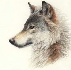 Wolf - side profile