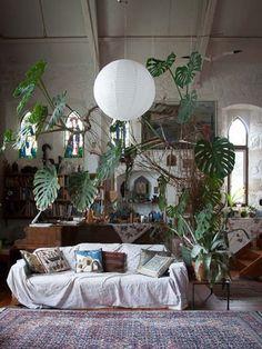 Männerhäuser mit männerpflanzen Pflanzenfreude.de
