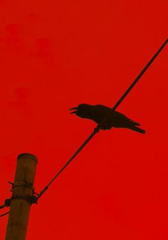"""A crow is cawing; / I also am by myself ""Japanese poem Haiku by TANEDA Santoka Haiku, Japanese Poem, Red Mirror, Shades Of Burgundy, Crows Ravens, My Cup Of Tea, Postmodernism, Light In The Dark, Illustrations Posters"