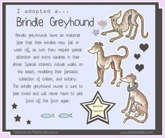 Brindle Greyhound by Elspeth Rose.   I LOVED my brindle and I miss him so much.