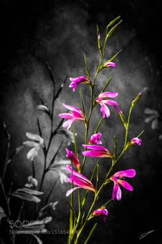 Artistic Flowers by R-Didier Fine Art Photography #InfluentialLime
