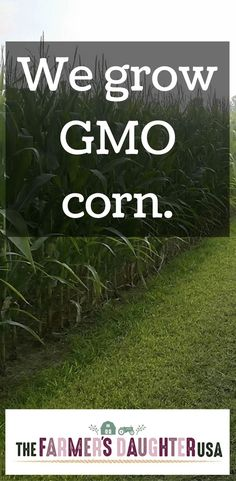 We grow GMO corn. Yes, that's right – corn that has been genetically modified. That stuff that so many activist groups and people claim is so bad and so dangerous and making everyone sick. We grow that stuff. All of our corn has two genetically engineered traits. The first one makes it resistant to the …
