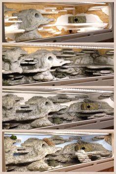 leopard gecko habitat setup - Google Search