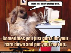 Funny pictures of animals Funny Animal Pictures,funny animals Pictures, funny animals Images, funny animals Photos,Really . Animals Doing Funny Things, Funny Animals, Cute Animals, Funniest Animals, Animals Images, Rabbit Wallpaper, Animal Wallpaper, Hd Wallpaper, Funny Rabbit