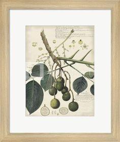Botanical VI by Alexandre Descubes